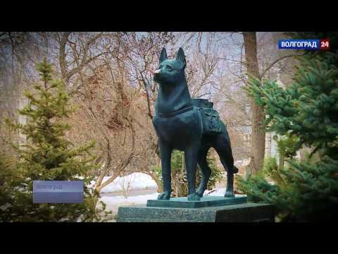 Памятник собакам подрывникам, истребителям танков. Выпуск от 12.03.2017