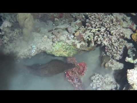 Moray Vs Scorpionfish