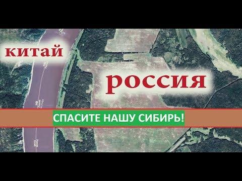 Сибирь станет пустыней. Вырубка леса в Сибири.