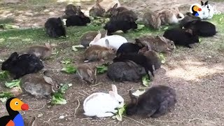 Abandoned Bunnies Dumped in Field Rescued by Woman in Las Vegas   The Dodo