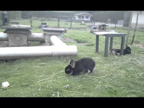 Gelukkige konijnen en cavia's