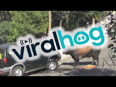El toro que embistió un todoterreno 4x4 en unas fiestas españolas