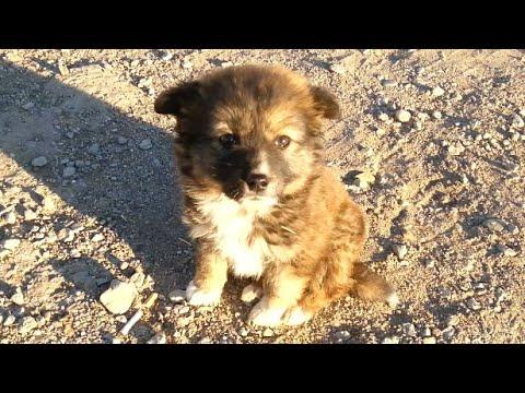 Een kleine puppy dwaalt alleen over de weg