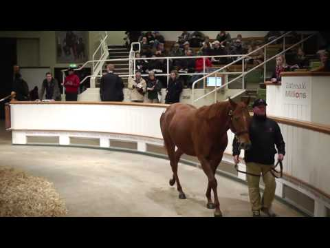 Tattersalls December Mare Sale Day 2 Video Review 2014