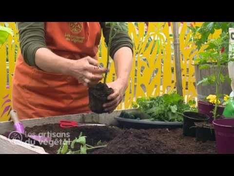 Comment planter vos tomates ?