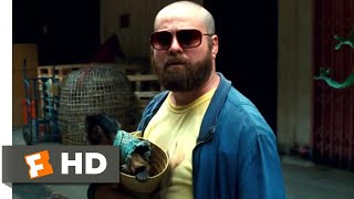 Nonton The Hangover Part Ii  2011    Phil Gets Shot Scene  4 6    Movieclips Film Subtitle Indonesia Streaming Movie Download