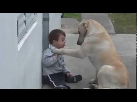 gli animali sono meravigliosi, guardate e imparate dal loro amore.