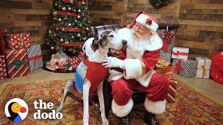 Shelter Dog Gets The Best Surprise For Christmas | The Dodo by The Dodo