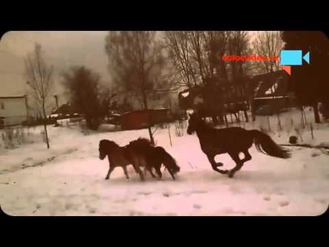 Nahánění koníků