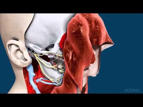 Comprehensive Facial Transplant Video