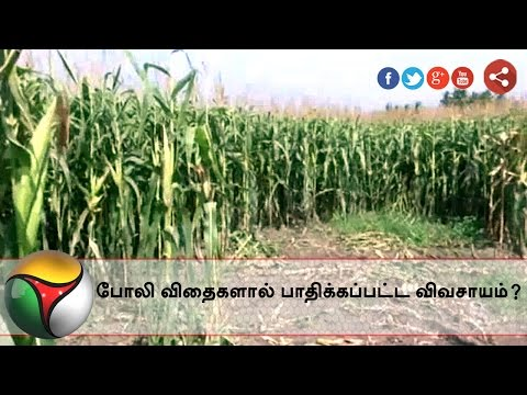 Special-report-Hardships-faced-by-farmers-due-to-fake-seeds