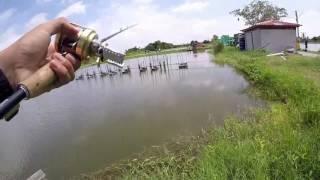 Barramundi fishing @ Pilot111 fishing pool Thailand
