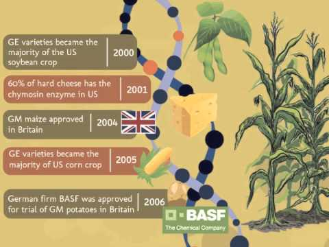 the potential of genetically modified foods essay