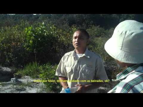 Kaiteur Falls - Guiana