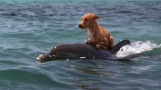 Video DOLPHIN & DOG SPECIAL FRIENDSHIP - Vangelis: Song Of The Seas download in MP3, 3GP, MP4, WEBM, AVI, FLV January 2017