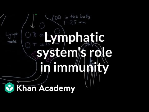 The lymphatic system\'s role in immunity (video)   Khan Academy