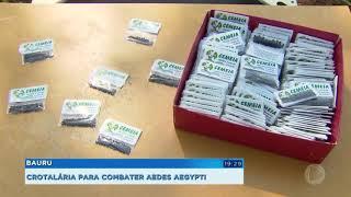 Bauru distribui sementes de crotalária  no combate a dengue