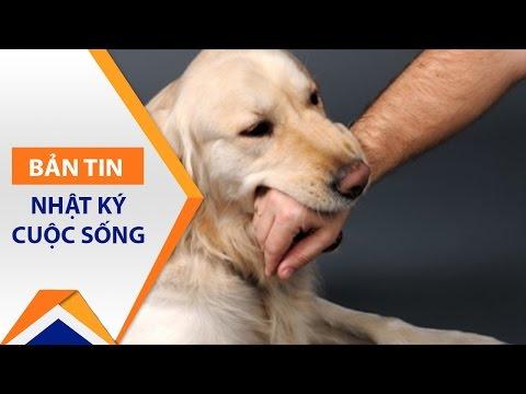 Cảnh báo: 12 người bị chó dại cắn tử vong | VTC1 - Thời lượng: 2 phút, 53 giây.