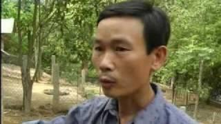 Phu Tho Vietnam  city photos gallery : Wild boar farm in Phu Tho Province, Vietnam - Nuôi lợn rừng tại Phú Thọ
