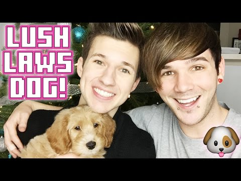gets - OH MY GAY GOD!! The time has come! I felt like it was the right time to welcome a little furry friend into our home :) We still haven't named our little boy so leave some suggestions in the...