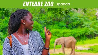 Entebbe Uganda  city photo : EP #60 | Entebbe Zoo - UGANDA VLOG!