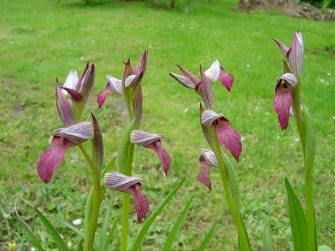 la sublime valle delle orchidee