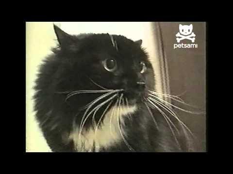 Talking cat says Oh Long Johnson (видео)