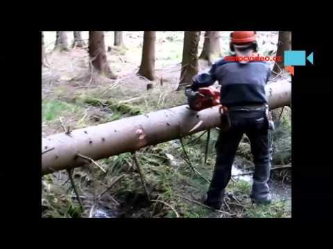 Nebezpečné odřezávání a zavření vyvráceného stromu na Vysočině