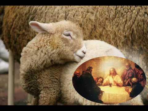 gesù si rifiuta di uccidere l'agnello: ecco i versi parola per parola -