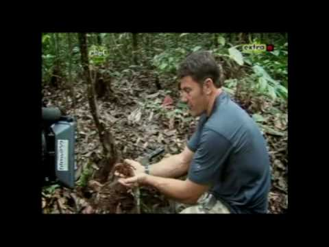Spider - A clip from Steve Backshall's Deadly 60 programme where he handles the worlds biggest spider.