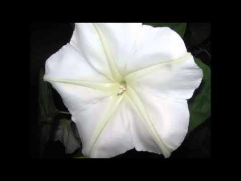 Tekst piosenki Diahann Carroll - It's Only A Paper Moon po polsku