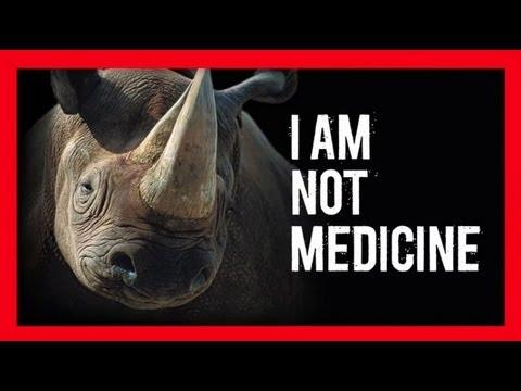 Sừng tê giác không phải thuốc chữa bệnh!