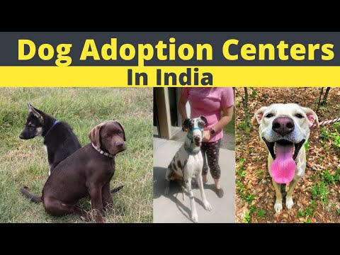 Free Dog Adoption Center L Dog Adoption Center In Mumbai L Dog Adoption Center In Delhi  Kolkata