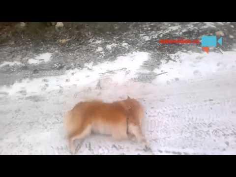 Psí klouzání