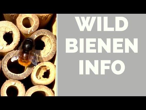 Wildbienen Info - Insektenhotel für Balkon, Terrasse, Garten