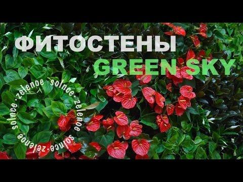 Вертикальное озеленение в виде фитостены