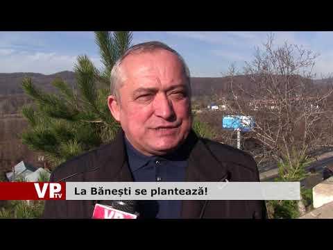 La Bănești se plantează!