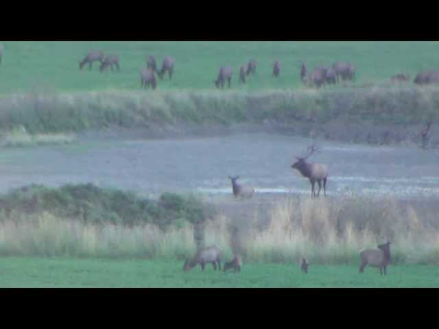 2013 Elk Video - 2