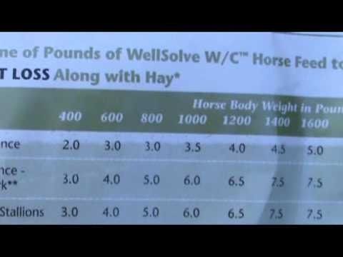 Wellsolve W/C horse feed review - weight control / good clicker treat