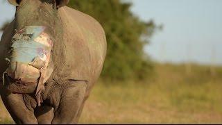 Rapport: Diplomater og politi hjælper med at udrydde næsehornet