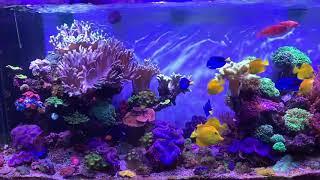 Hồ LPS và cá do vietnam aqua thi công, bảo dưỡng
