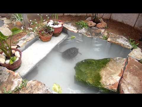 Las tortuguitas bruno y kika mascotas - Como construir un estanque para tortugas ...