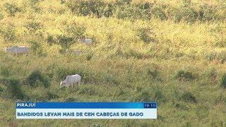 Bandidos furtam mais de 100 cabeças de gado de propriedades rurais em Pirajuí
