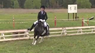 Пони тоже кони
