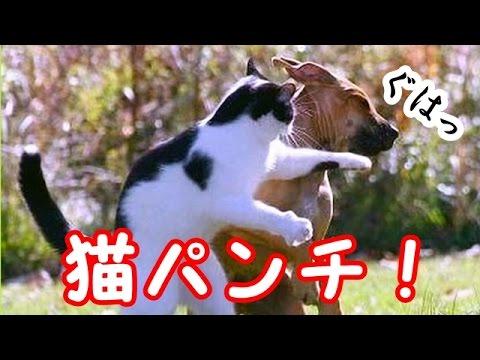 cani e gatti amore e odio
