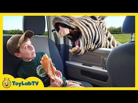 Animal Adventure Park Zoo with Animals for Kids, Dinosaur Track  Fun Outdoor Wildlife Activities