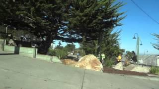 7 ноя 2015 ... Монтерэй(Калифорния)-Городок на ТИХОМ ОКЕАНЕ.6/11/2015 .... nВпечатления от Лос Анжелеса, Калифорния на машине, Часть 1...