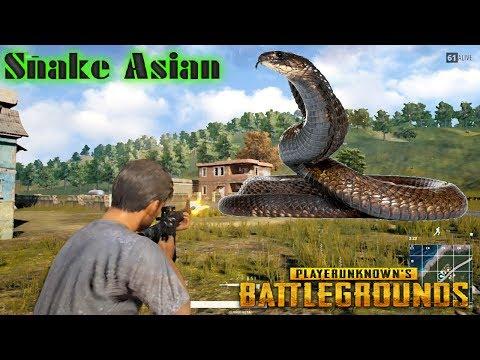 BATTLEGROUNDS - Snake gánh team !