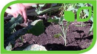 #1330 Sabine Rebers Gartentipp - Gemüse im Hochbeet aussäen