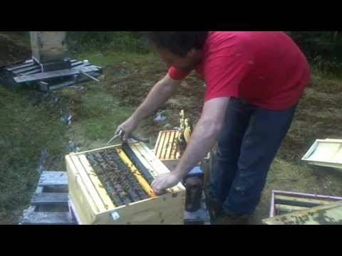 First Time Splitting Honey Beehive!!